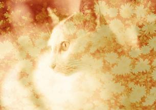 猫と秋桜(セピア) FYI00299759