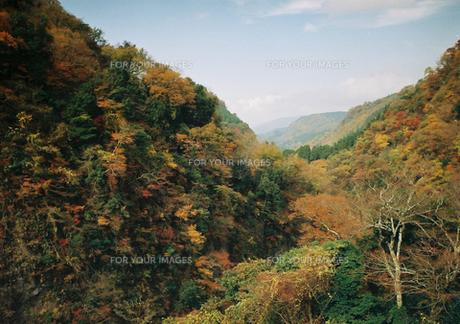 紅葉(耶馬渓谷) FYI00299764