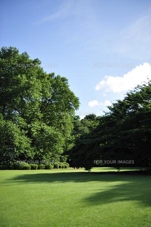 初夏の公園 FYI00304752