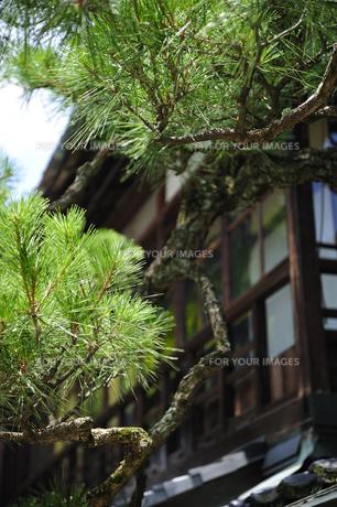松と日本家屋 FYI00304778