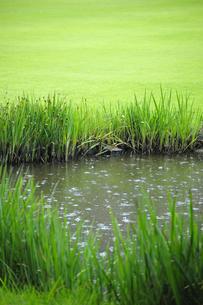 雨の落ちる池 FYI00304783