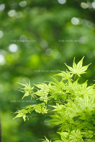 緑のイメージ FYI00304858