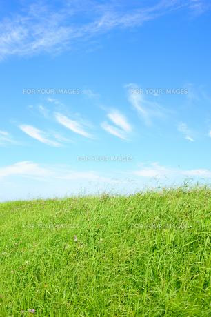草の土手と青空 FYI00304897