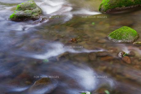 苔の岩と清流 FYI00305505