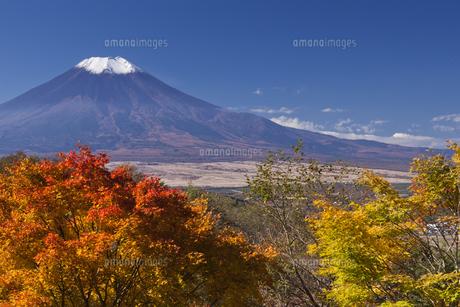 紅葉の木々と富士山 FYI00307119