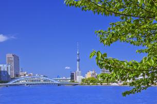 新緑の隅田川とスカイツリー FYI00307307