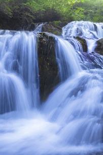 新緑の魚止めの滝 FYI00307418