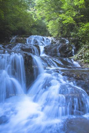 新緑の魚止めの滝 FYI00307425