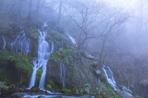 朝霧の吐竜の滝 FYI00307436