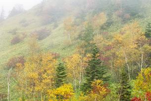 霧湧く紅葉の高原 FYI00307444