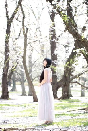 桜とロングドレスを着た若い女性 FYI00307748
