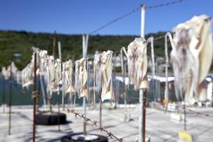 奥武島 漁港の風景 FYI00310787