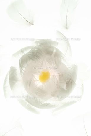 羽と卵のイメージ FYI00310847
