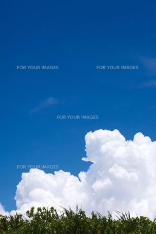 青空と入道雲 FYI00310909