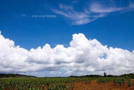 青空と入道雲3 FYI00310911