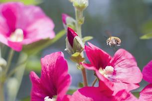 花とミツバチ FYI00311382