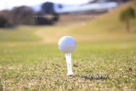 ティーアップされたゴルフボール FYI00313306