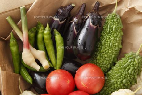 産直野菜 FYI00313539