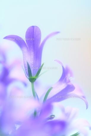 春の音色 FYI00314636