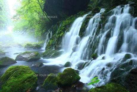 秋田県にかほ市 夏の元滝伏流水 FYI00315290