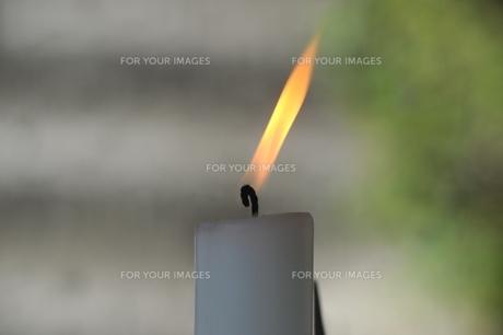ロウソクの炎-2 FYI00315405