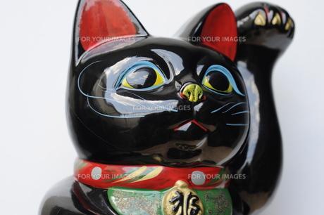 黒招き猫アップ FYI00315412