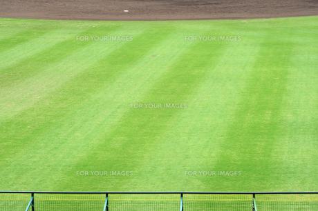外野の芝生 FYI00315731