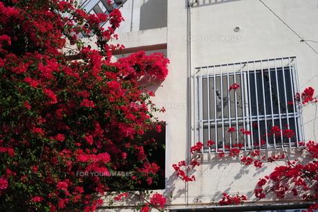マンションの白壁とブーゲンビリア-1 FYI00316267