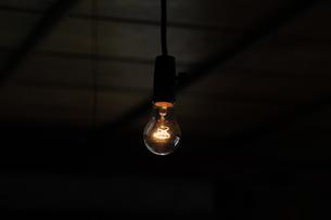 裸電球-11 FYI00316693