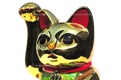 金の招き猫 FYI00316763