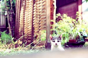 子猫 FYI00316976
