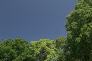 新緑と空 FYI00317706