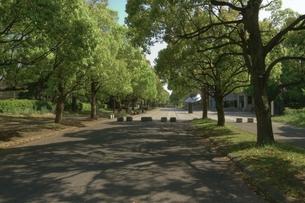 新緑の並木道 FYI00317709