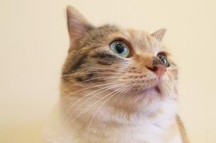 ネコの横顔 FYI00317715
