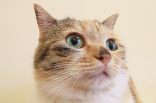 ネコの瞳 FYI00317717