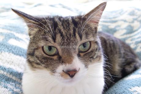 ネコの瞳 FYI00317719