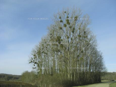 宿り木のある風景 FYI00317732