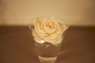 淡い色のバラ FYI00317735