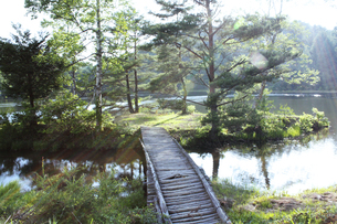 湖畔の小さな橋と光 FYI00317746