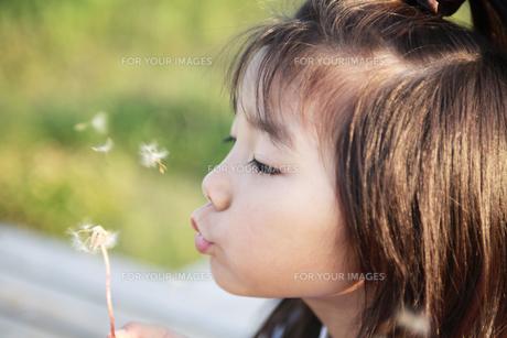 タンポポの綿毛と女の子」 FYI00318345