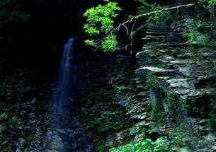 小滝の水音が響く FYI00319041
