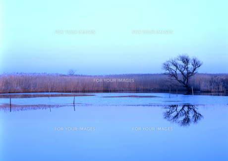 静かな湿原 FYI00319066