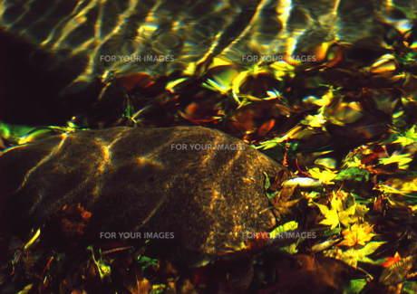 清水に揺らめく秋の陽 FYI00319073