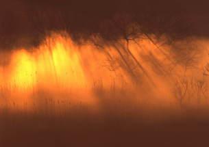 光で輝く朝靄 FYI00319084