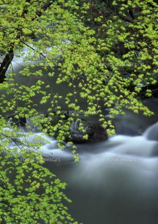 新緑と渓谷 FYI00319128