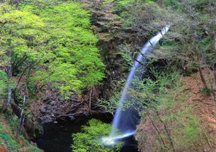 新緑の中の滝 FYI00319166