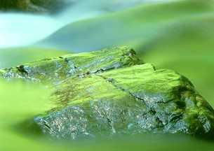 渓谷の岩まで緑に染まる FYI00319194