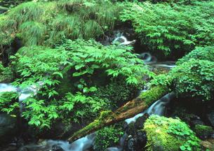 豊かな水の潤い FYI00319213