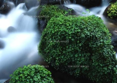 環境豊かな渓谷 FYI00319226