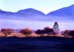 霧が流れる小田代ヶ原(初秋) FYI00319270